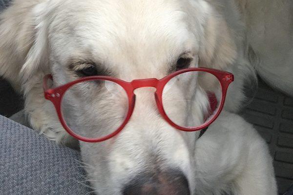 Cam'o with Sunglasses